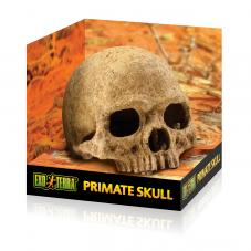 Exo Terra Primate Skull (Secure hiding place)