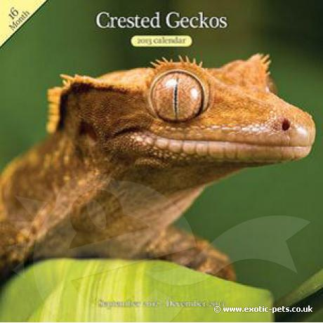 Crested Gecko Wall Calendar