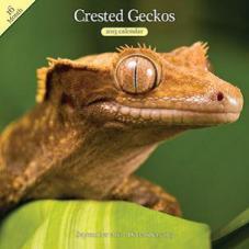 Reptile Calendars - FREE!!!! photo