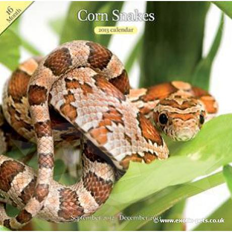Corn Snake Wall Calendar