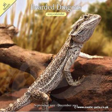 Bearded Dragon Wall Calendar