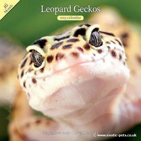 Leopard Gecko Wall Calendar