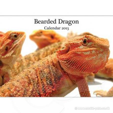 Bearded Dragon A4 Calendar