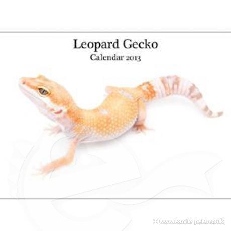 Leopard Gecko A4 Calendar