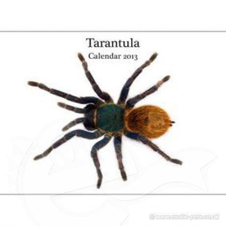 Tarantula A4 Calendar