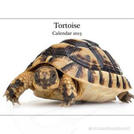 Tortoise A4 Calendar