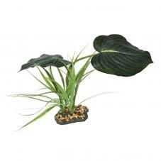 Komodo Woodland Canopy (Standing plant)