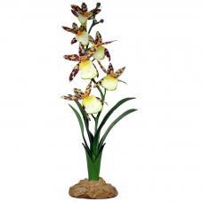 Komodo Spider Orchid