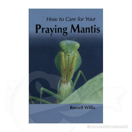 How to Care for Your Praying Mantis