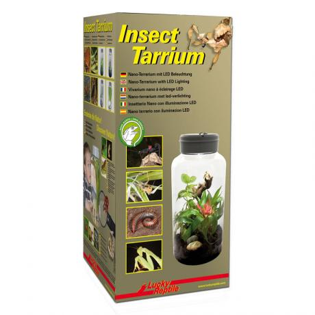 Lucky Reptile InsectTarrium