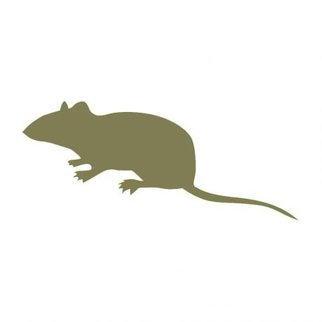 Frozen Mice