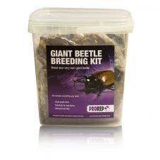 ProRep Chafer Beetle Breeding and Rearing Kit