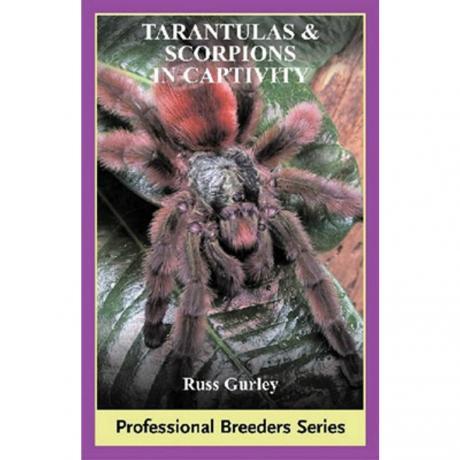 ECO - Tarantulas and Scorpions in Captivity