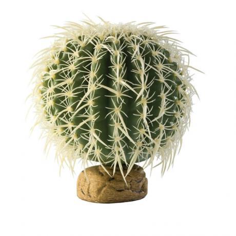 Exo Terra Barrel Cactus