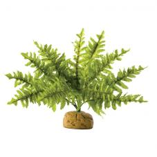 Exo Terra Boston Fern (Ground plants)