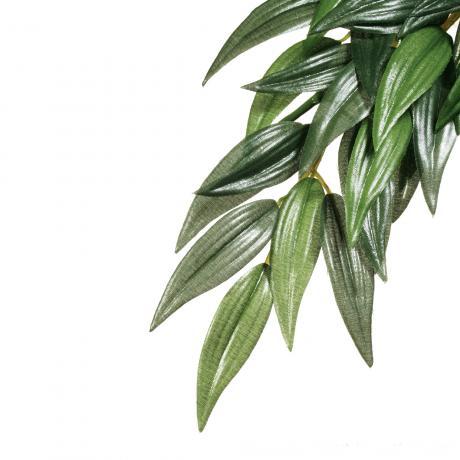 Exo Terra Silk Plant Ruscus