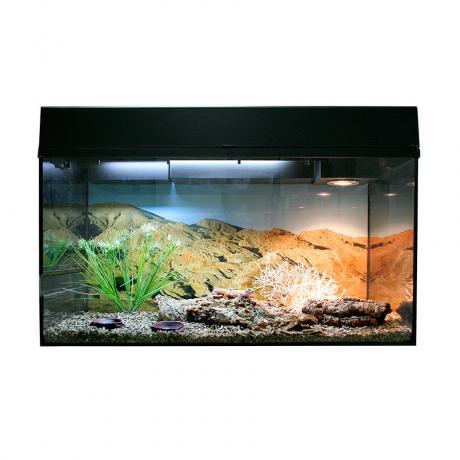 Lucky Reptile Leopard Gecko Starter Kit