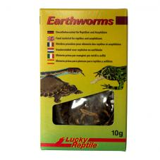 Lucky Reptile Earthworms