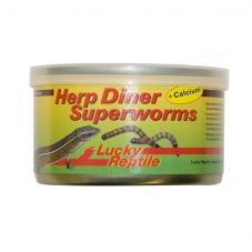 Lucky Reptile Herp Diner Superworms