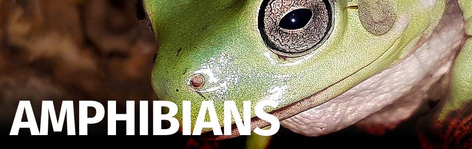 Exotic Pets - Amphibian, Reptile and Invert UK exotic pet shop