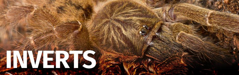 Exotic Pets Amphibian Reptile And Invert Uk Exotic Pet Shop