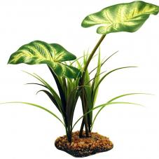 Komodo Broadleaf Canopy (Standing plant)