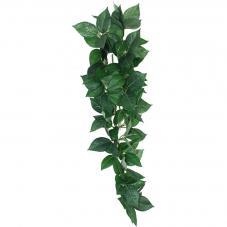 Komodo Sumatra Hanging Vine (Hanging plant)