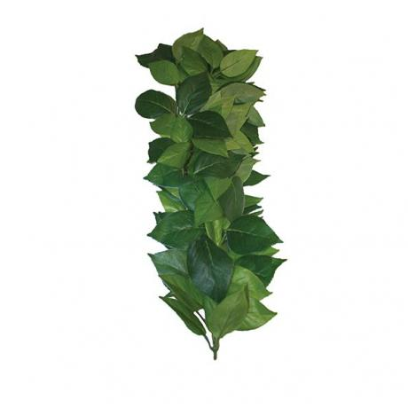 Komodo Ficus Silk Vine