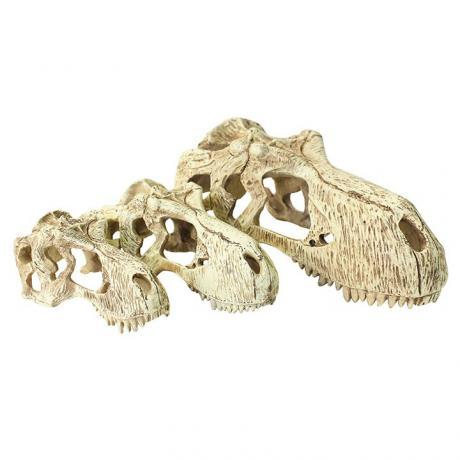 Komodo T-Rex Skull
