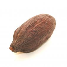 Exotic Pets Cacao Pods