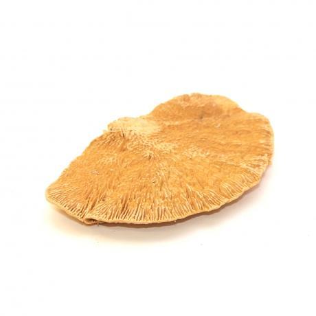 Exotic Pets Sponge Mushroom