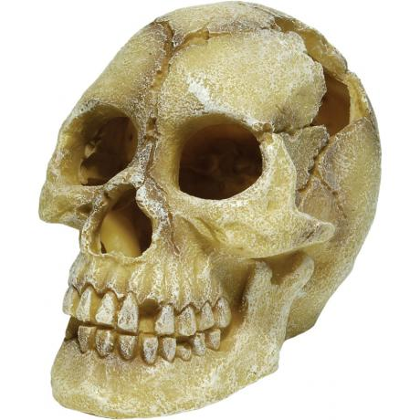 Repstyle Skull Human