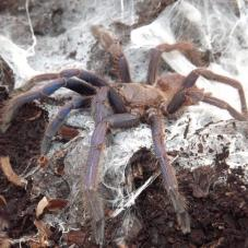 Inverts for sale, buy Inverts online at Exotic Pets UK