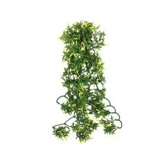 Komodo Croton Plant (Hanging plant)