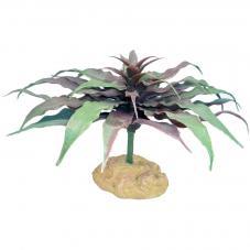 Komodo Star Cactus (Standing plant)